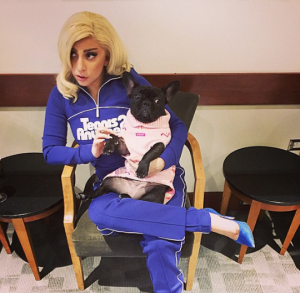 Lady gaga and puppy