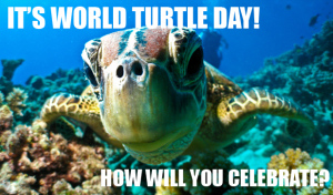world_turtle_day